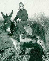 mom donkey